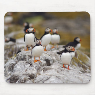 A Group of Puffins Mouse Pads