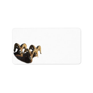 A Group of Rams Address Label