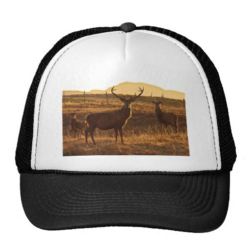 A group of Red Stags Hat
