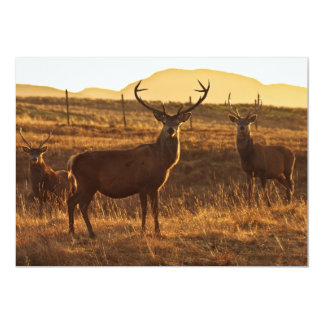 A group of Red Stags Invitation