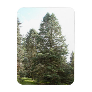 A Group of Trees Photo Magnet