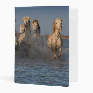 A Group Of White Horses In The Camargue Region Mini Binder