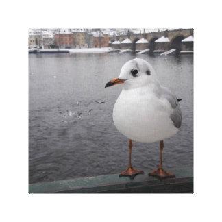 A gull in Prague Canvas Print