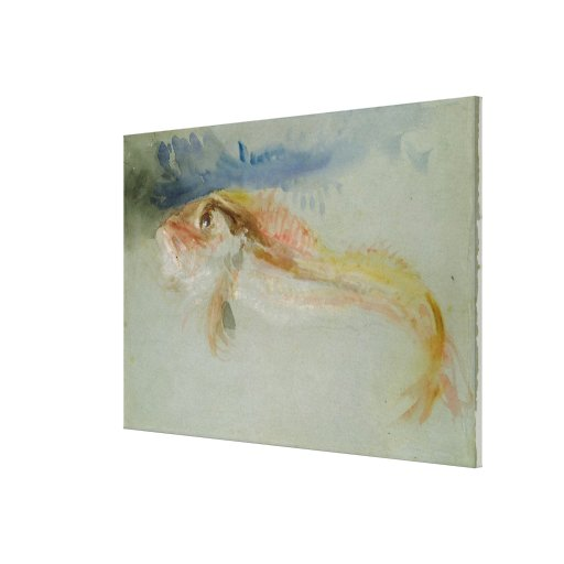 A Gurnard Stretched Canvas Prints