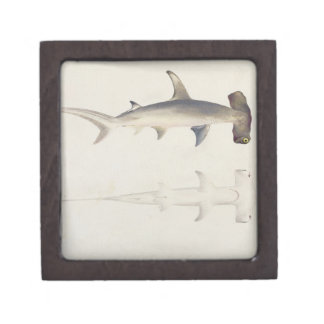 A Hammer-headed Shark, Loheia, formerly attributed Jewelry Box