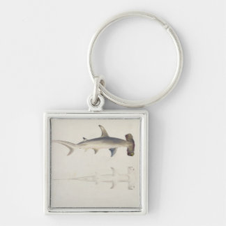 A Hammer-headed Shark, Loheia, formerly attributed Keychains