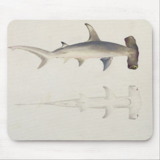 A Hammer-headed Shark, Loheia, formerly attributed Mouse Pad