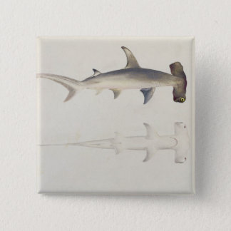 A Hammer-headed Shark, Loheia, formerly attributed Pinback Button