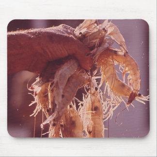 A Handful of Shrimp Mousepad