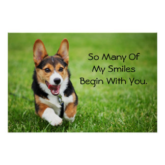 A Happy And Energetic Pembroke Welsh Corgi Puppy Poster