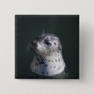 A harbor seal button