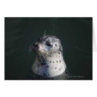 A harbor seal greeting card