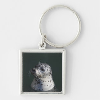 A harbor seal keychain