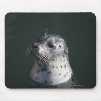 A harbor seal mouse pad