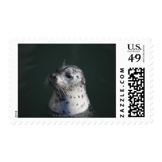 A harbor seal postage
