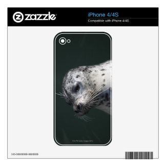 A harbor seal decal for the iPhone 4S