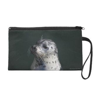 A harbor seal wristlet