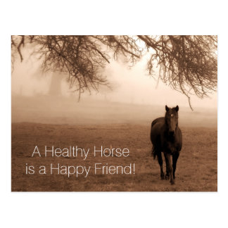A Healthy Horse Veterinary Appointment Reminder Postcard