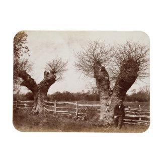 A Hedgerow Tree, 1852 (albumen print) Magnet