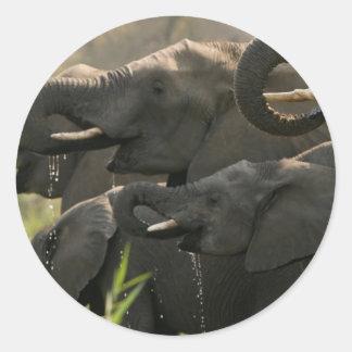 A Herd Of African Elephants (Loxodonta Africana) Classic Round Sticker