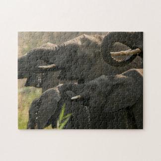 A Herd Of African Elephants (Loxodonta Africana) Jigsaw Puzzle