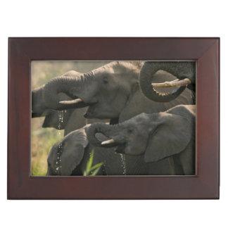 A Herd Of African Elephants (Loxodonta Africana) Keepsake Boxes