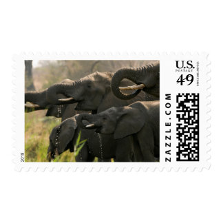 A Herd Of African Elephants (Loxodonta Africana) Postage