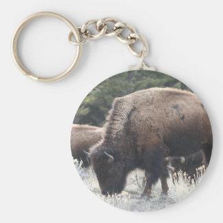 A Herd of Brown Bison Graze in a grassy Meadow Basic Round Button Keychain