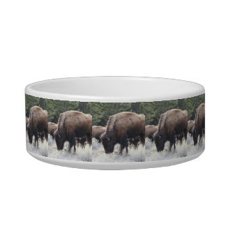 A Herd of Brown Bison Graze in a grassy Meadow Bowl