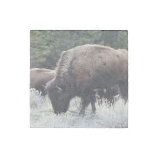 A Herd of Brown Bison Graze in a grassy Meadow Stone Magnet