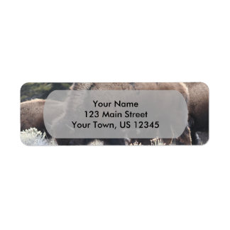 A Herd of Brown Bison Graze in a grassy Meadow Return Address Labels