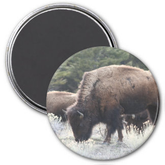 A Herd of Brown Bison Graze in a grassy Meadow Refrigerator Magnets