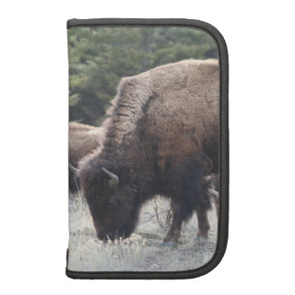 A Herd of Brown Bison Graze in a grassy Meadow Folio Planners