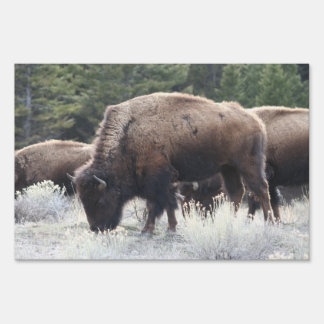 A Herd of Brown Bison Graze in a grassy Meadow Sign