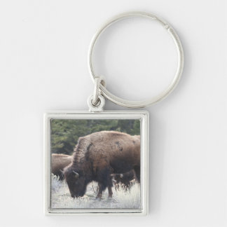 A Herd of Brown Bison Graze in a grassy Meadow Silver-Colored Square Keychain