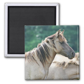 A herd of Brumby Horses from Australia Magnet