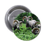 A Herd of Rams Button