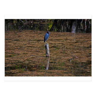 A Heron in the Slough Postcard