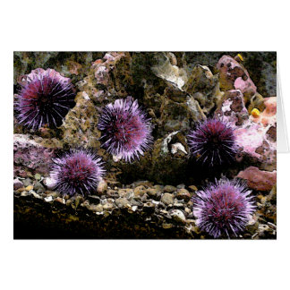 A Horde of Urchins Greeting Card