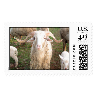 A Horned Ram Stamps