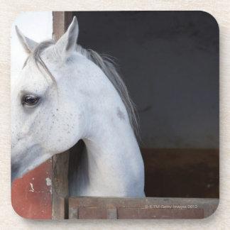 A Horse (Equidae) Drink Coaster