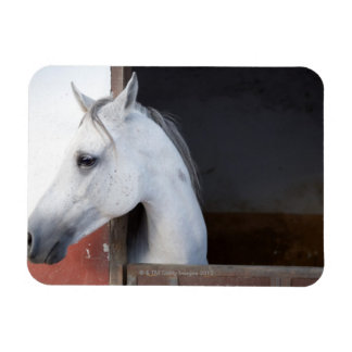 A Horse (Equidae) Rectangle Magnets