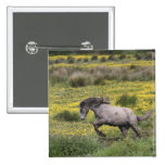 A horse running in a field of yellow wildflowers pins
