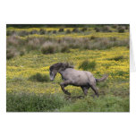 A horse running in a field of yellow wildflowers greeting cards