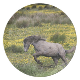 A horse running in a field of yellow wildflowers plates