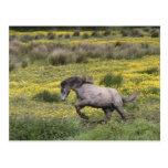 A horse running in a field of yellow wildflowers postcards