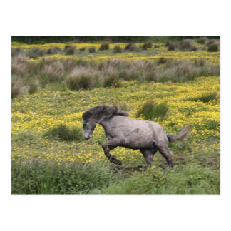 A horse running in a field of yellow wildflowers postcard