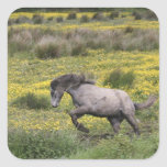 A horse running in a field of yellow wildflowers stickers