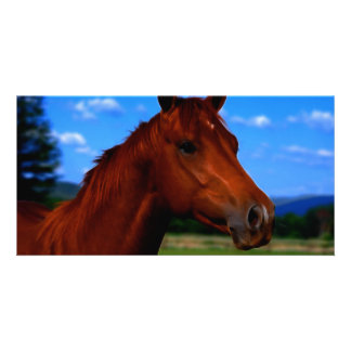 A horse standing proud card