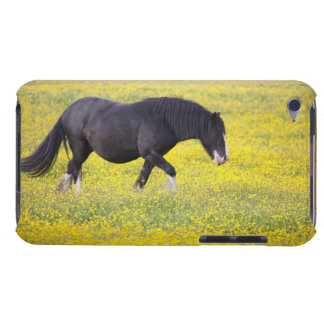 A Horse Walking In A Field Of Yellow Flowers Barely There iPod Case